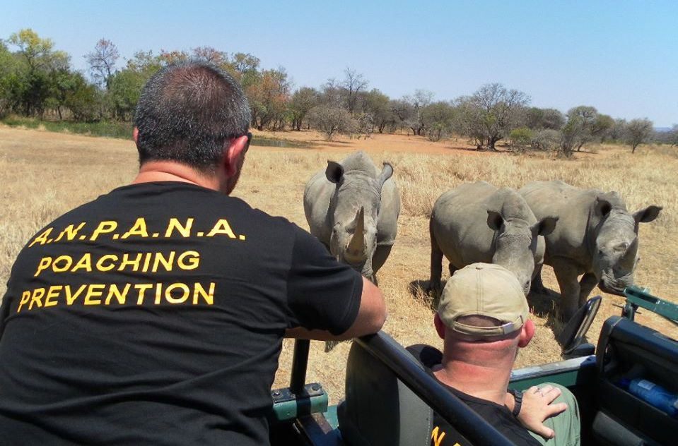 f09c6b45d3 Questo il numero di rinoceronti, confermato dal Ministero dell'Ambiente,  uccisi in Sudafrica dai bracconieri A questi si devono aggiungere i circa  40 uccisi ...