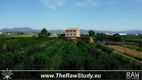 the raw study